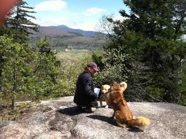 Can Dogs Hike Waterholes Canyon In Az