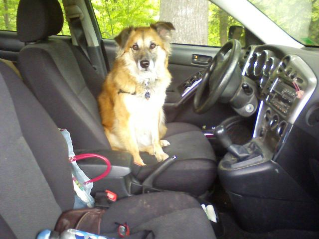 Chico at the wheel