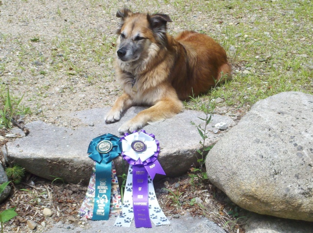 That's Chico with the ribbons we received for completing the Novice level of American Kennel Club agility trials. It too a year to get them both, but we only compete one or two days every couple of months.