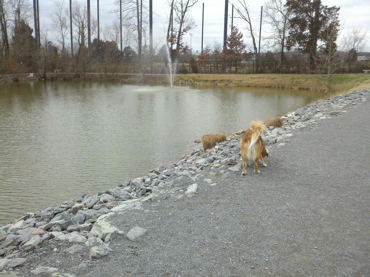 Pet Safe Invisible Dog Fence Appleton Wi