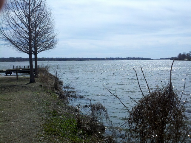 So we took a short walk at White Rock Lake Park (the least urban place I could find in Dallas).
