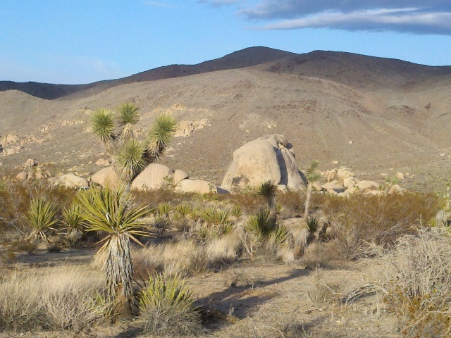 It's eerily beautiful, and the Joshua Trees are super interesting plants.