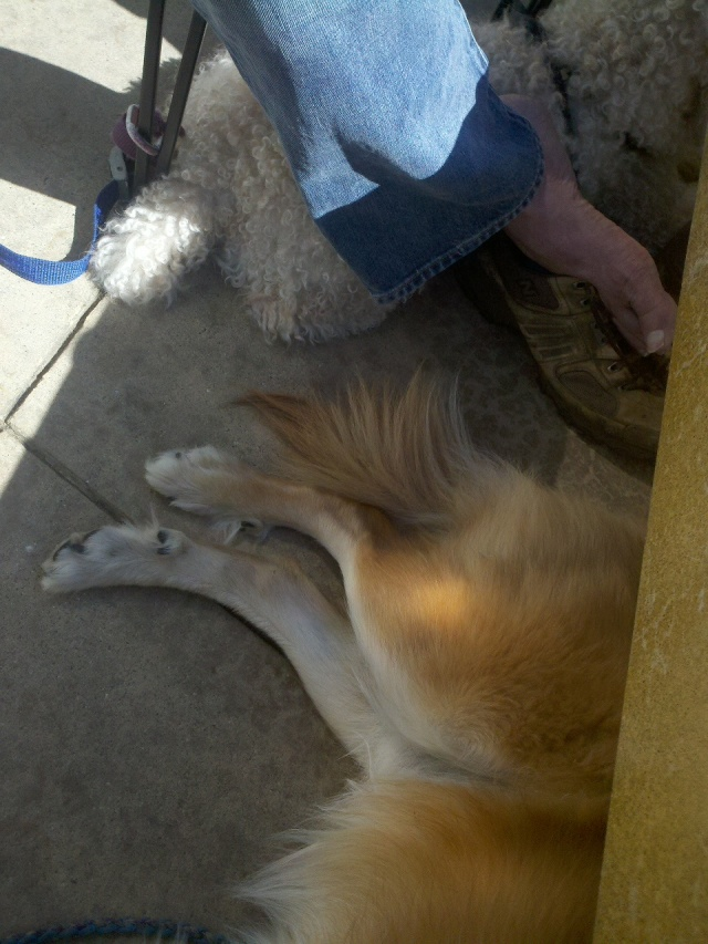 After about an hour and a half, Chico relaxed enough to move close enough to Jacques to get into the shade.