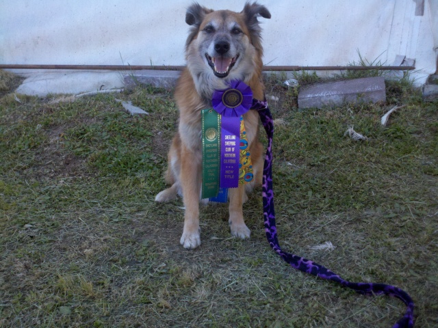 Chico now gets to compete at the excellent level in Jumpers. That's a whole different thing. LOTS of dogs in that class. Bye-bye blue ribbons, it was nice while it lasted.
