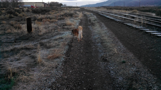 The railroad tracks are a great place to walk off-leash.