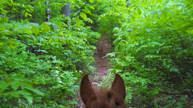 you can just see Chico in the middle of the trail - he's right between Dakota's ears.