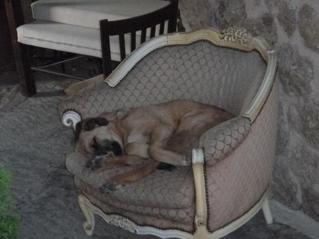 Nice dog bed, huh?