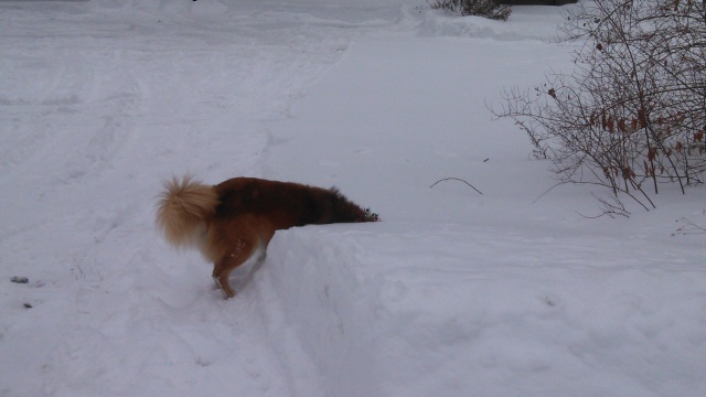 But he can't quite reach it from the plowed area.
