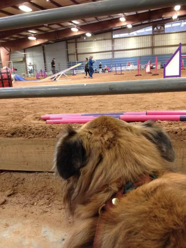 Chico watching me do ring crew duties.