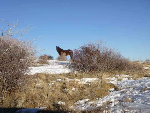 On the way out of the park we saw wild horses.