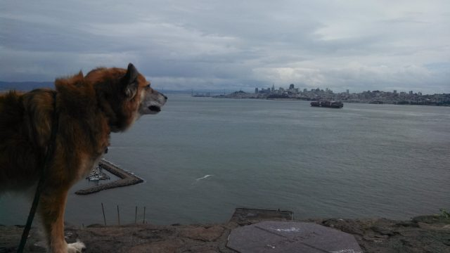 As usual, views don't impress him. For Chico, the important data is gathered with his nose.