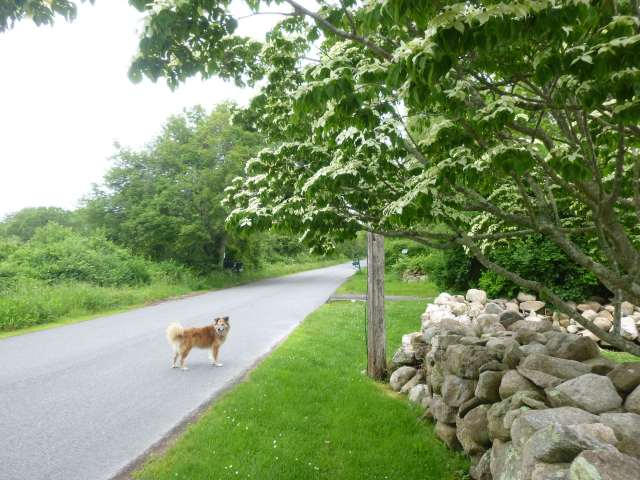 Let's start with a picture. A lovely dog and a lovely dogwood on Eva's road.