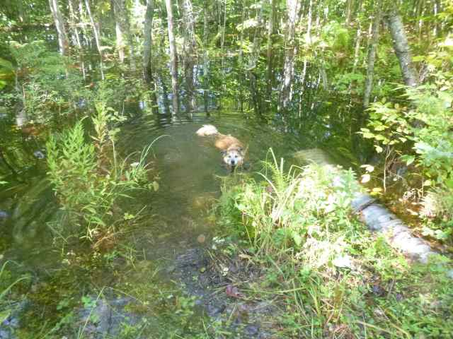 It does make a nice place for a dog to have a dip...