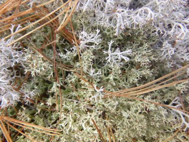 and lots of lovely lichen.