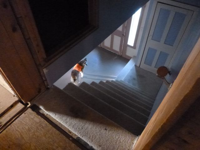 Looking down the stairs.